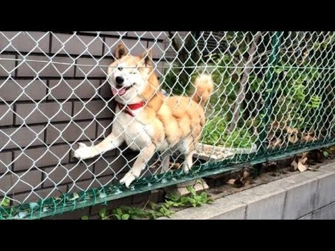 NOT THE SMARTEST DOGS doing DUMB THINGS – LAUGH at FUNNY DOGS compilation