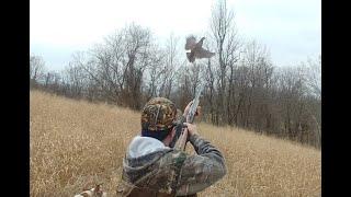 친구 재연합 꿩사냥 (미국  처커사냥), 최고 꿩사냥개