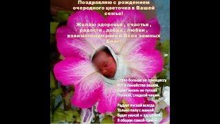 У меня родилась пятая внучка Екатерина.(Поздравление родителям)