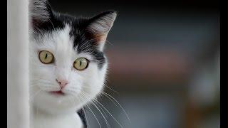 Коты под валерьянкой.