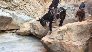 Extreme Mule Riding