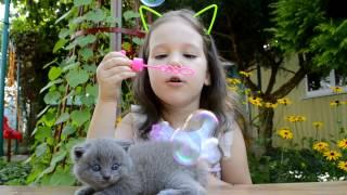 Смешные кошки Смешные видео про кошек