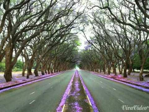 My Beautiful Home..Rhodesia Memories.