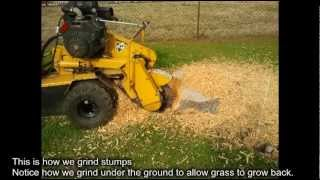 Stump Grinding Companies What to watch for