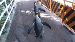 人気者がたくさんいる下田海中水族館に潜入取材♪ 園内をパトロールする...