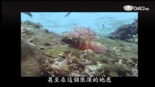 20140108《發現》百變藻類妙用多