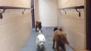 Puppies Get Ready for Nap Time  | Metro Dogs Daycare & Boarding Minneapolis