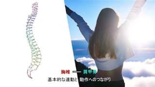 肩甲骨―胸椎 基本的な連動と動作へのつながり【国際統合リハビリテーション協会】 thumbnail
