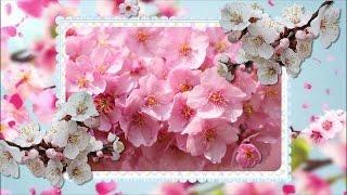 Цветущая сакура для любимых друзей!(Цветущая сакура для любимых друзей! Поздравления на все случаи жизни! Поздравляйте своих родных и друзей..., 2016-04-12T16:37:14.000Z)