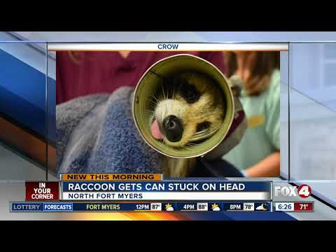 The Woody Show - Raccoon News: Veterinarians Use Can Opener to Free Raccoon