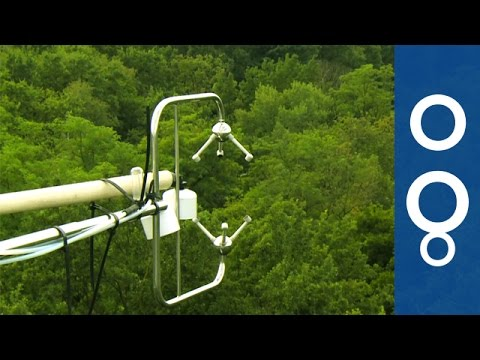 How Do Forests Breathe When Climate Changes? - Futuris