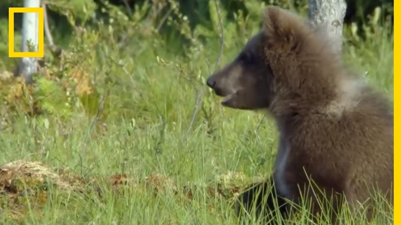 Ces oursons sont d'une curiosité insatiable
