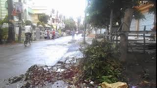 Royalty Free Video Footage   Leaves on road prafulla kanan west