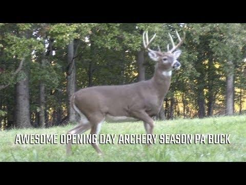 Awesome Opening Day Archery Season PA Buck!