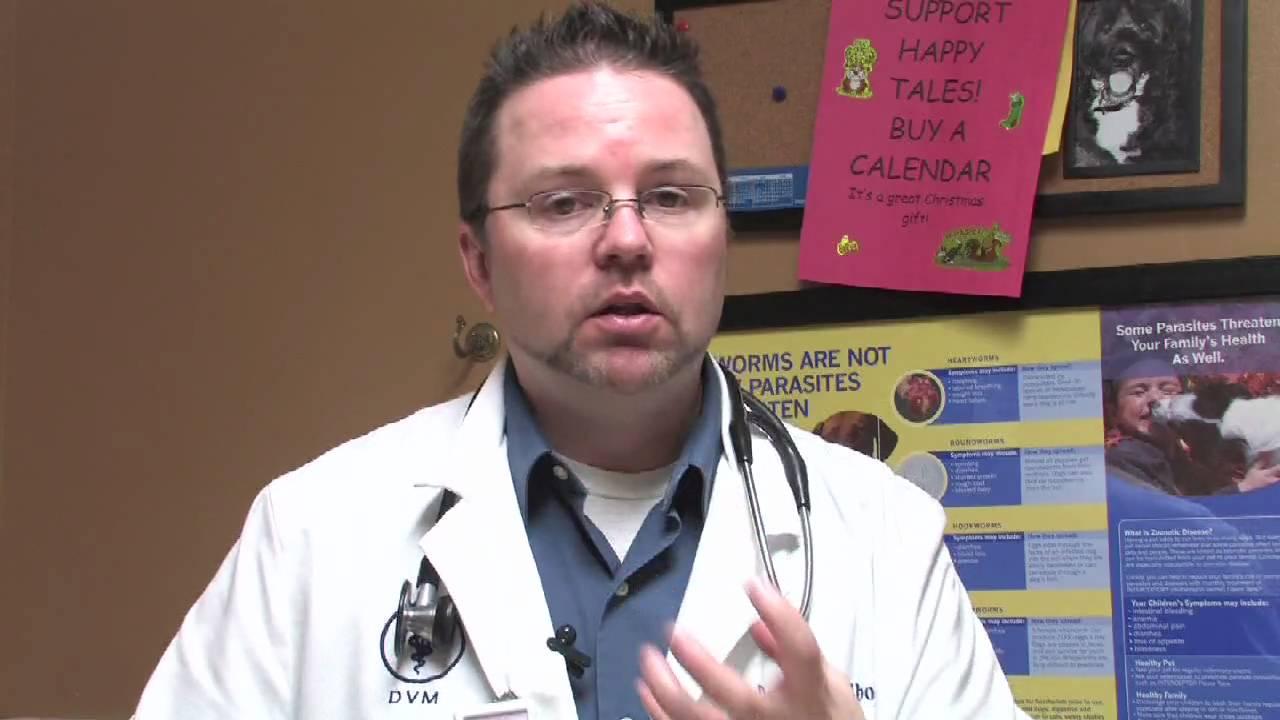 Canine Diseases & Treatment : Dog Eye Diseases