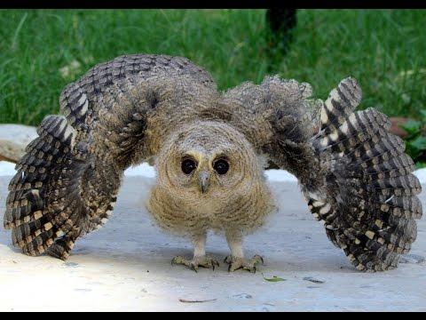 Transforming Owl !!..........(Saving life)