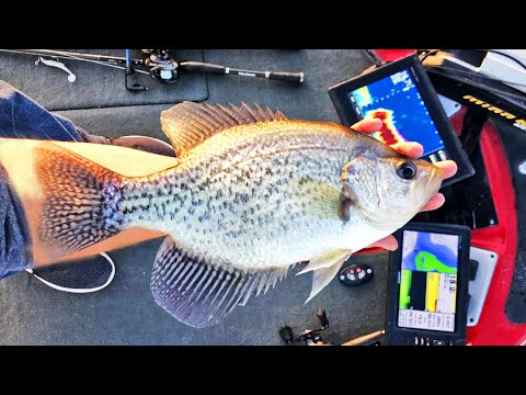 Catching BIG CRAPPIE On Lake Guntersville In River Current! (MONSTERS)