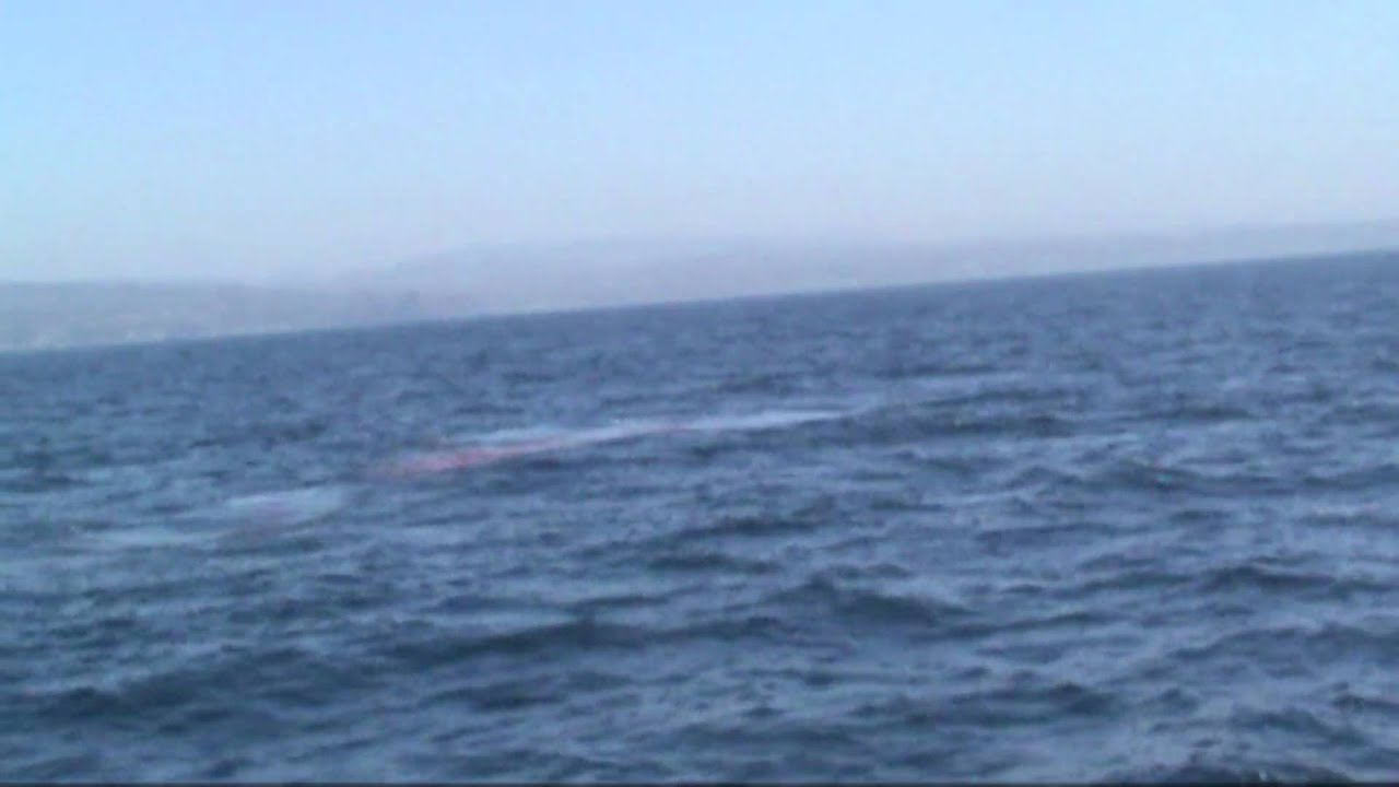 a blue whale pooping warning it u0027s disguisting youtube