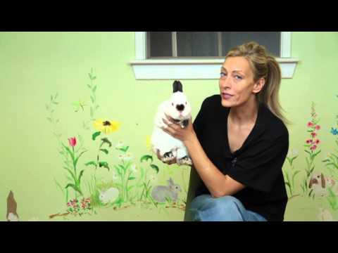 Are Dwarf Rabbits Good Pets? : Rabbit Care