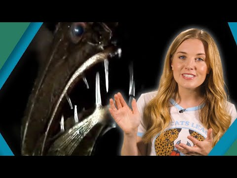 How Do Animals Survive At The Bottom Of The Ocean? | Earth Unplugged