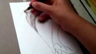 Drawing A German Shorthaired Pointer Puppy!