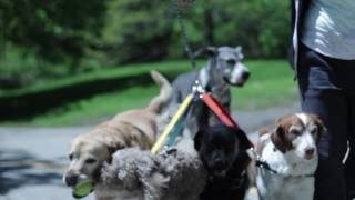 The LeadAll: A Stress Reduction Leash System for Dog Walkers