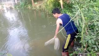 Quăng chài tưởng vào cọc nhưng thật bất ngờ đó là cá to