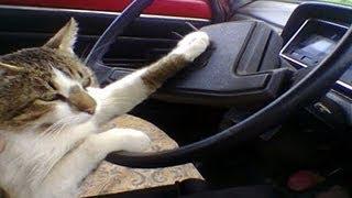 Кошки рулят Подборка смешных котов и котят для ОТЛИЧНОГО настроения
