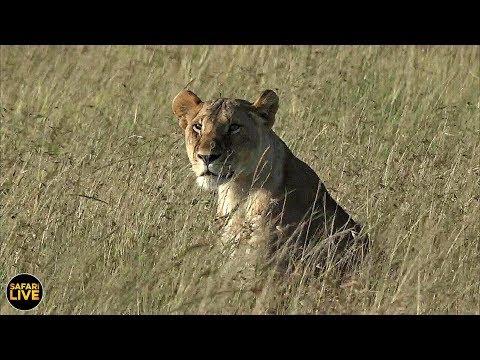 safariLIVE - Sunrise Safari - July 20, 2019