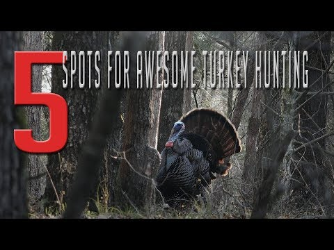The Best Turkey Hunting Locations!