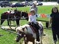 Pony ride at Florence Farmer's Market