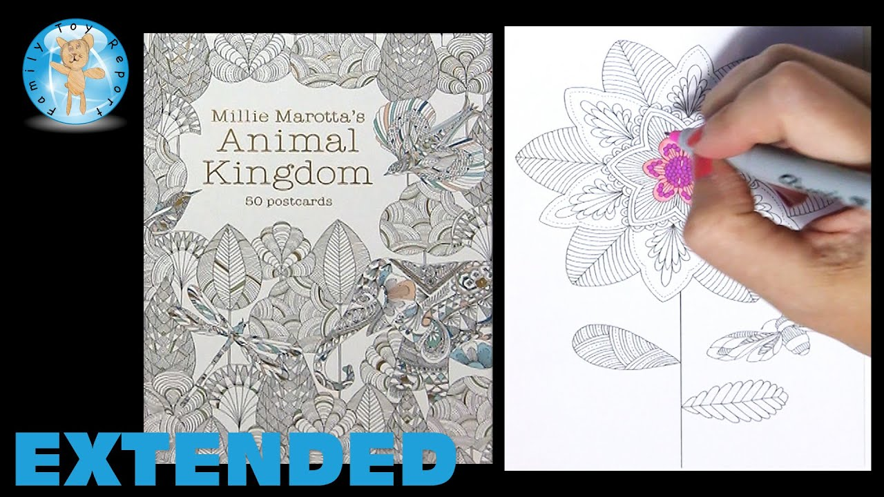 Millie Marottas Animal Kingdom 50 Postcards Adult Coloring Book Flower Moth