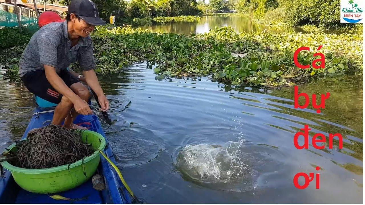 463 | Giăng câu cá tra hôm nay phá kỷ lục P2 | Fishing
