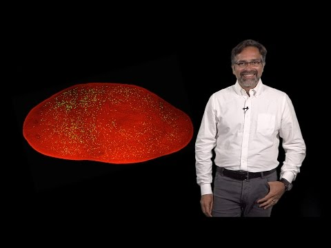 Alejandro Sánchez Alvarado (Stowers, HHMI) 1: Scale, proportion and organ regeneration