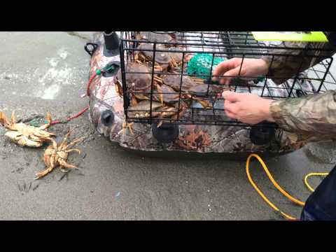 ловля крабов в канаде работа