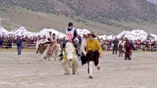 A yak racing event was held in Damxung County of southwest China's ...