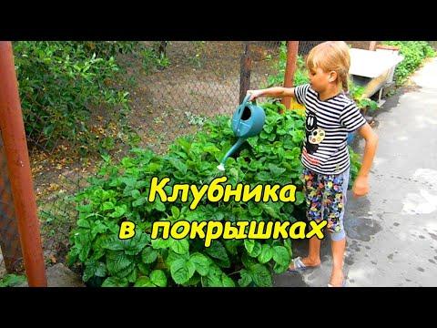 Выращивание клубники в покрышках
