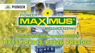 Odmiany rzepaku ozimego Maximus® Pioneer®