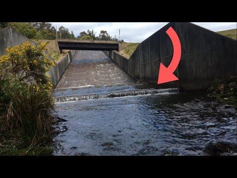 This Spillway Was LOADED With FISH! (Trout Fishing Tasmania)