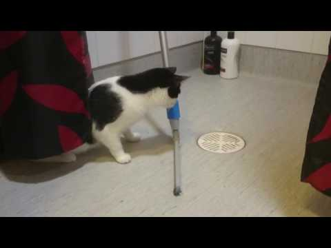 Funny cat video – Confused because of the magic trick