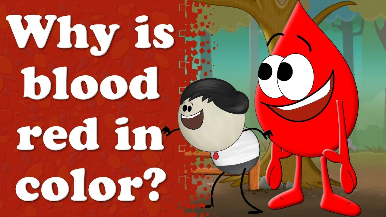Why Is Blood Red In Color Aumsum Kids Education Science White Cell Diagram For Cells Learn