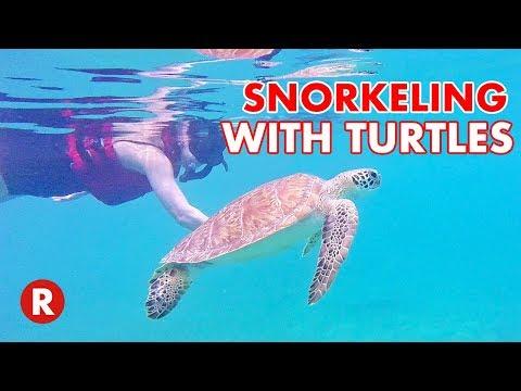Swimming With Turtles In St. Thomas, USVI // St. Thomas Adventure Tours // US Virgin Islands