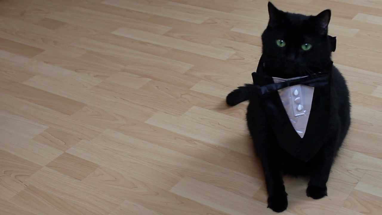 N2 The Talking Cat S2 Ep17 How To Be Preppy Youtube