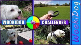 Dog Vs Challenges  Are Malshi Dogs smart?  Wookidog [Maltese Shih Tzu]