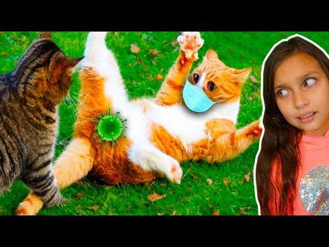 СМЕШНЫЕ 😻КОТЫ на КАРАНТИНЕ! СОБАКИ. СИДИМ ДОМА! НЕ ЗАСМЕЙСЯ ЧЕЛЛЕНДЖ! Funny Cats Реакции Валеришка