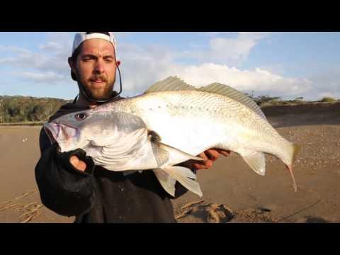 Fishing For Mulloway Land Based   Westin Hypo Teez Soft Plastic Lure