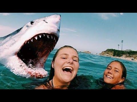 die-5-tödlichsten-haiangriffe---mit-kamera-aufgenommen!