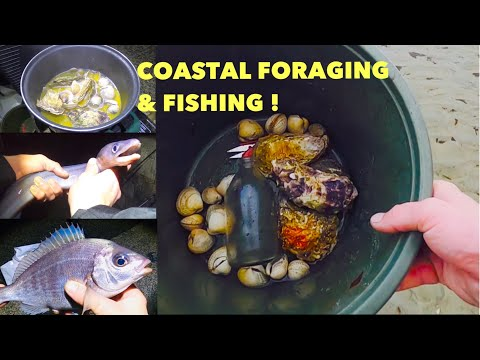 COASTAL FORAGING & BAIT FISHING ! Oysters ,Cockles Cooked While Fishing !