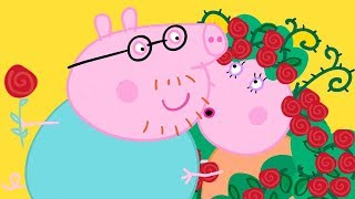 Peppa Pig Official Channel 🌹 Mummy Pig and Daddy Pig's Valentine's Day Special