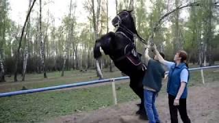 Высшая школа верховой езды (Павлович Елена Львовна)